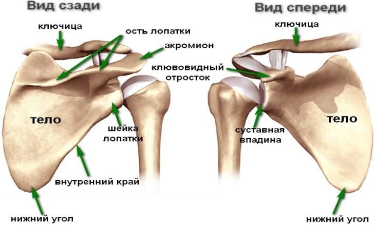 Рентген при артрозе плечевого сустава