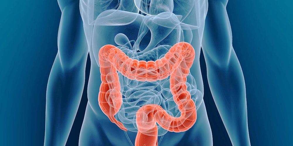 колоноскопия кишечника (главный ключ)