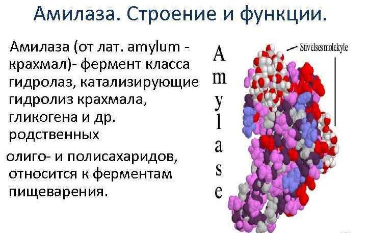 amilaza-povyshena-v-krovi
