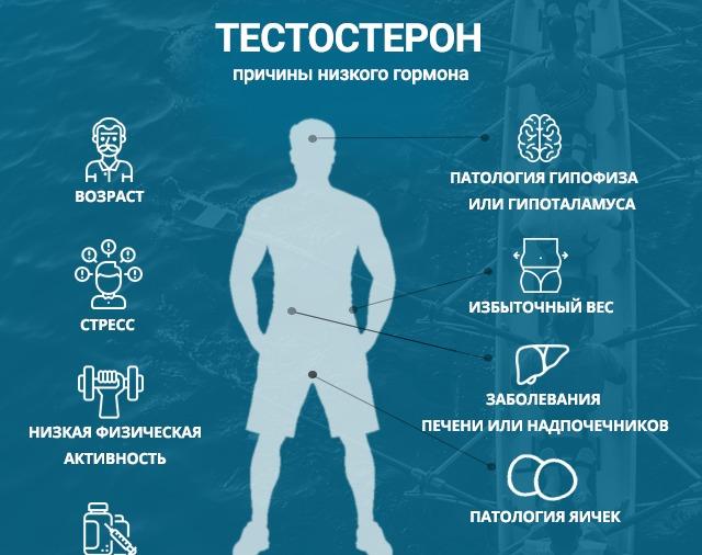 свободный тестостерон норма у женщин