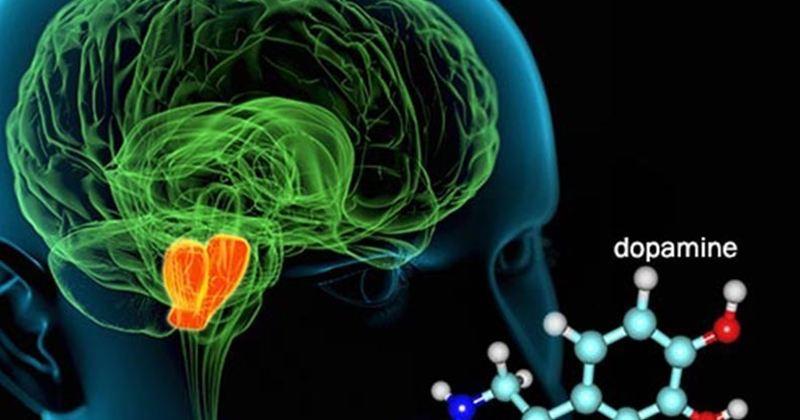 дофаминергическая система