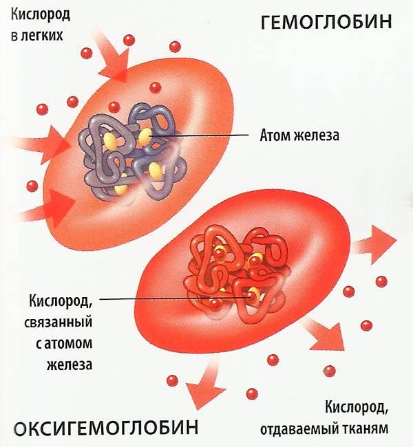 ehritrocity-v-krovi-povysheny