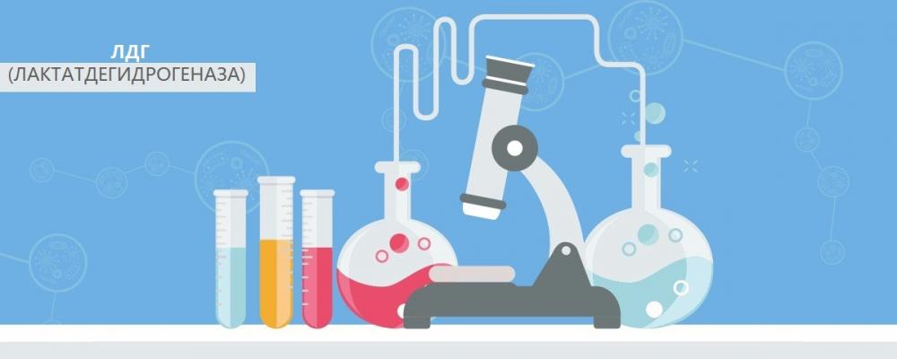 ЛДГ (лактатдегидрогеназа) - показания, помощь в расшифровке анализов