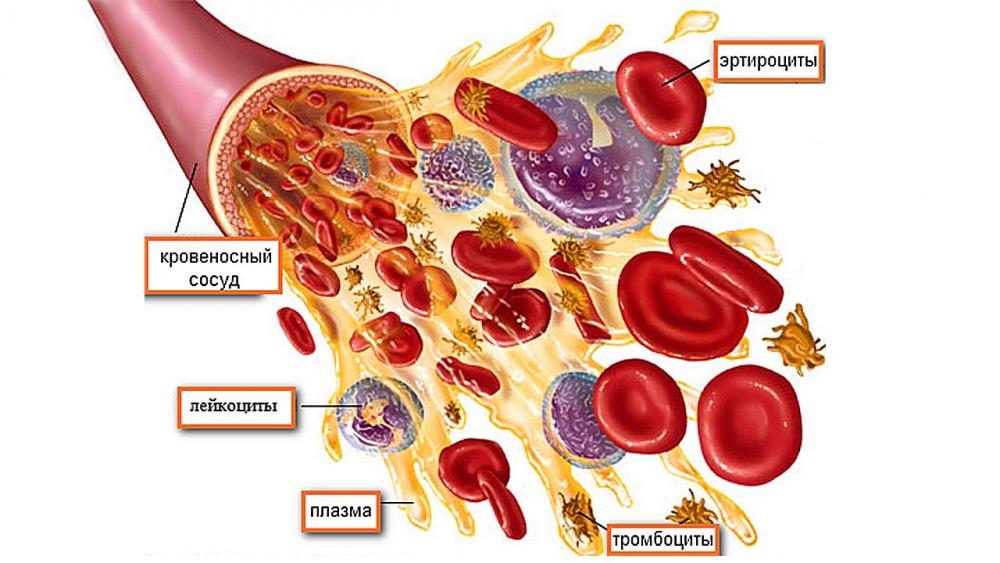 почему повышены тромбоциты в крови у женщины