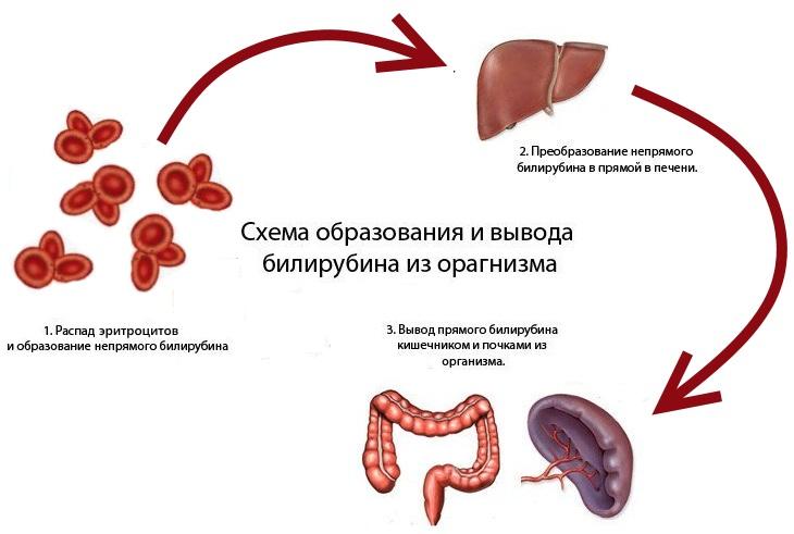 как снизить уровень билирубина в крови