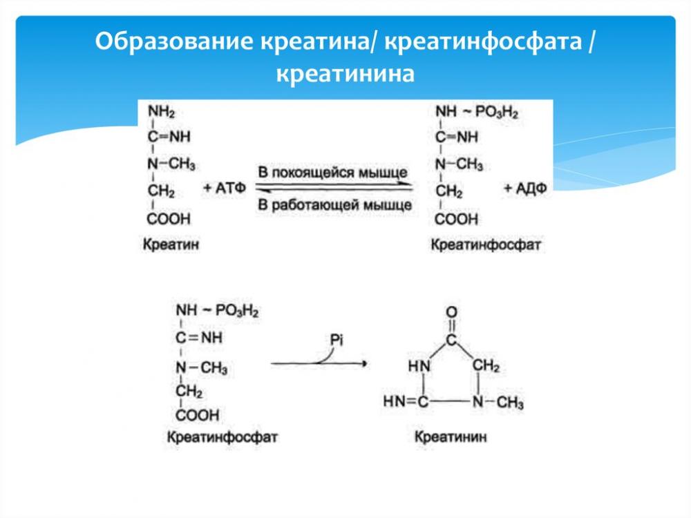 Биохимия почек - online presentation