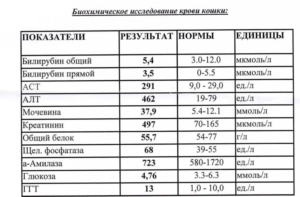Расшифровка 12 показателей анализа крови у кошки: щелочная фосфатаза ...
