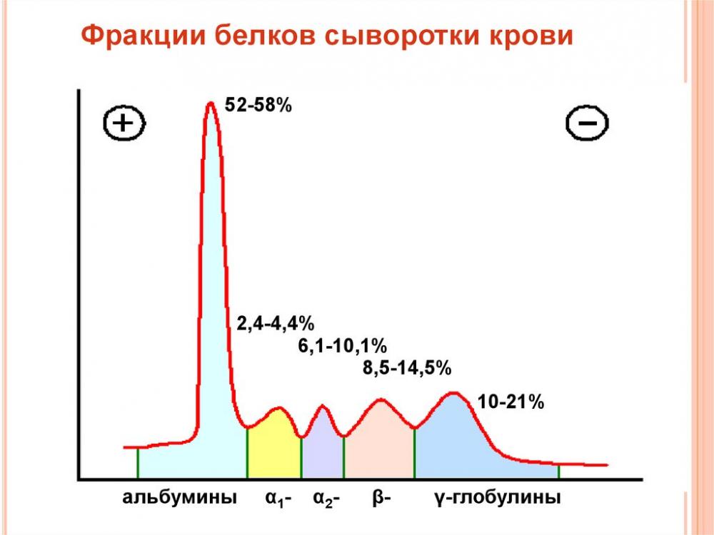 Биохимия крови-2. Фракции белков сыворотки крови - online presentation