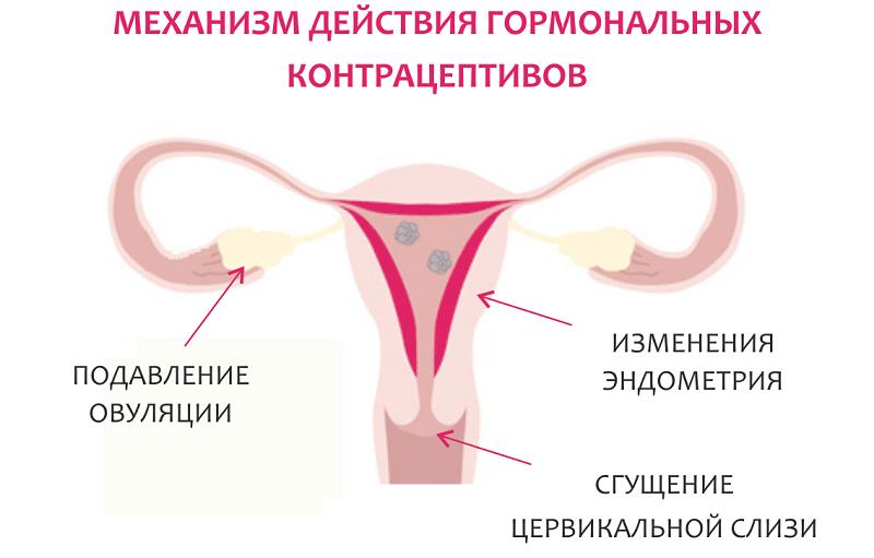 Оральные контрацептивы: польза и риски